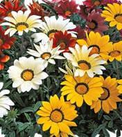 Семена цветов Газании Mix 100 семян