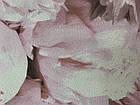 Обои на флизелиновой основе AS Creation   37658-2 пионы 1,06*10,05м, фото 2