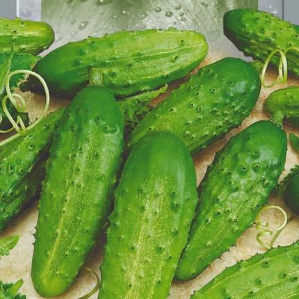 Семена Огурец Конкурент 1 г Seedera 2764, фото 2