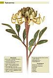 Ганутель. Квіти з ниток і дроту, фото 3