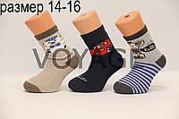 Дитячі шкарпетки махрові для малюків п/е ТР 14-16 м387(1-3 ведмедик,машинка,слоник) хлопчик