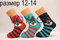 Детские носки махровые для малышей х/б Стиль люкс  12-14  819