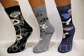 Детские носки махровые новогодние  Стиль Люкс Ходок 22-24  517,518,519