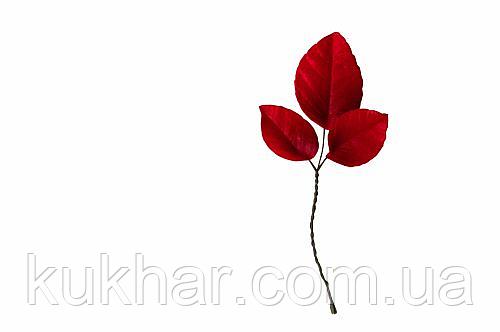 Гілка листя червоного