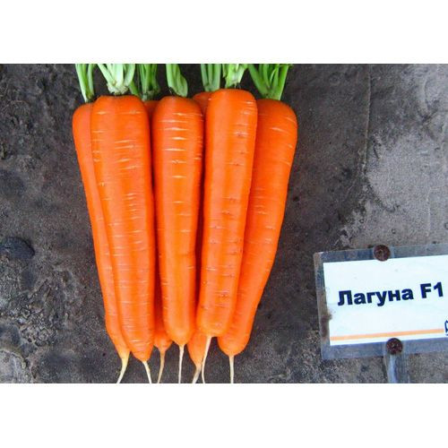 Семена Моркови Лагуна F1 (фракция 1.6-1.8) 100.000 семян Nunhems