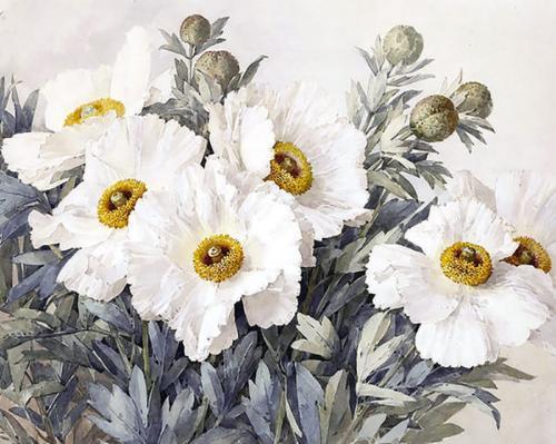 Картина рисование по номерам Чарівний діамант Прекрасные анемоны РКДИ-0250 40х50см набор для росписи, краски,