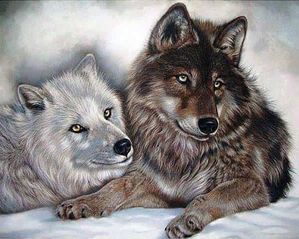 Картина рисование по номерам Чарівний діамант Волки – Инь и Янь РКДИ-0045 40х50см набор для росписи, краски,