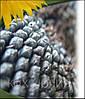 Семена подсолнечника ЛГ5550, фото 4