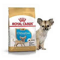 Royal Canin Chihuahua Puppy 1.5 кг сухой корм (Роял Канин) для щенков породы чихуахуа