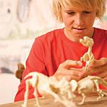Набір для розкопок 4M Скелет трицератопса (00-03228), фото 8