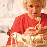 Набір для розкопок 4M Скелет стегозавра (00-03229), фото 8