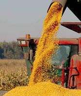 Семена кукурузы Кадр 267 МВ