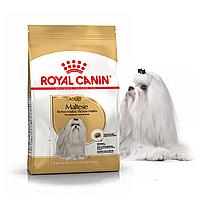 Royal Canin Maltese Adult 0.5 кг сухой корм (Роял Канин) для собак породы мальтийская болонка