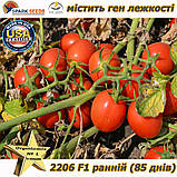 "Семена, томат 2206 F1 (ранний, лежкий) ТМ ""Lark Seeds (США), упаковка 500 семян, фото 4"