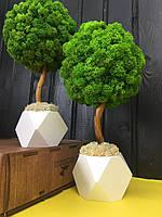 Декоративное Дерево из стабилизированного мха 30 см. Декор для дома офиса Оригинальный корпоративный подарок