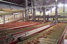 Системи яйцезбору