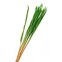 Пампасная трава стабилизированная (зеленая) 68 см, пучок, фото 1