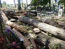 Видалення дерев на кладовищах