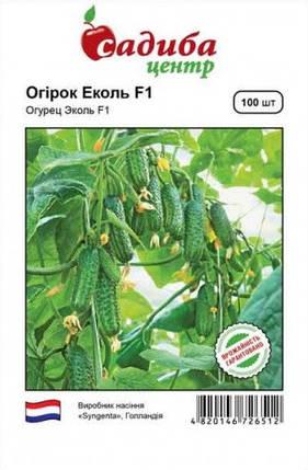 Насіння огірків Еколь F1 100 шт, Syngenta, фото 2