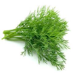 Дилл / Dill семена укропа 500 г — ранний сорт (30-35 дней), ароматный Clause