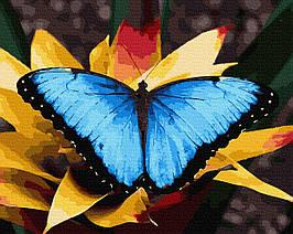Картина за Номерами Морфо 40х50см RainbowArt
