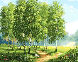 Картина за Номерами Зелені берези 40х50см RainbowArt