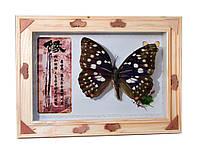 Бабочка в рамке 17,3х12,3х2,5см (24398)