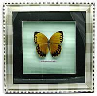 Бабочка в рамке 30х30см (18586)