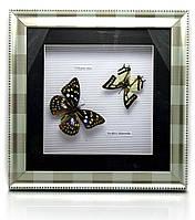 Бабочки в металлической рамке (30х30х4см)