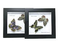 Бабочки в рамке 20х20х3см (25989)