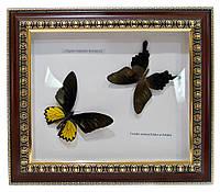 Бабочки в рамке 31х36х3см (24393)