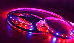 Светодиодная фитолента SMD 5050 (60 LED/m) IP54 Econom