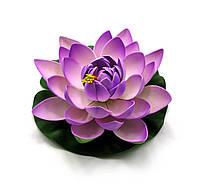 Цветок лотоса плавающий