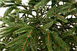 Ель искусственная Альпийская 2.1м, литая зеленая, фото 3