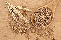 Зерно полба (спельта) полбяная каша