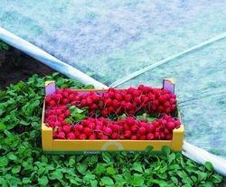 Применение агроволокна при выращивании овощей. Срок эксплуатации агроволокна