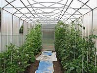 Урожайная теплица: что лучше всего выращивать в парнике