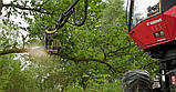 Валочная головка для рубок ухода и сбора биомассы Bracke C16.c Bracke Forest, фото 3