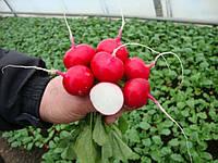 Семена редиса Диего F1  25000 калиброванных сем. Hazera