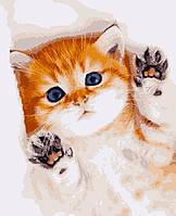 Картина рисование по номерам Пухнаста радість PN0670 Artissimo 40х50см розпис за номерами набір, фарби,