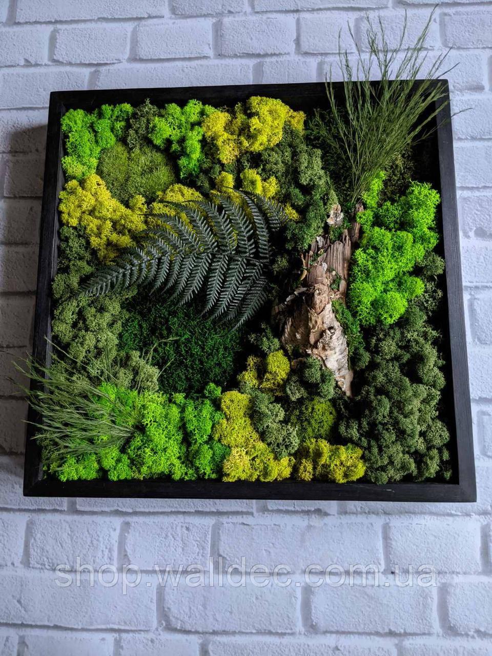 Картины из стабилизированного мха и стабилизированных растений