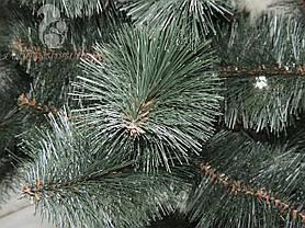 Сосна темно зелена 3 м, фото 2