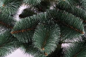 Сосна зелена Білі кінчики 2,30 м, фото 2