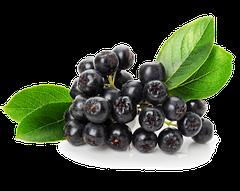 Саженцы аронии (черноплодной рябины)