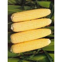 Кукуруза сахарная Рання Насолода F1 (2500 нас.) Lark Seeds
