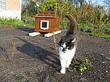 Будка для кота 40х50 плоский верх, фото 2