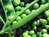 Горох овощной Тиара (ранний) (2500 с.) Lark Seeds