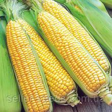 Семена кукурузы Хмельницкий ФАО 280