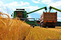 Украина увеличила экспорт изделий из зерна и муки в ЕС