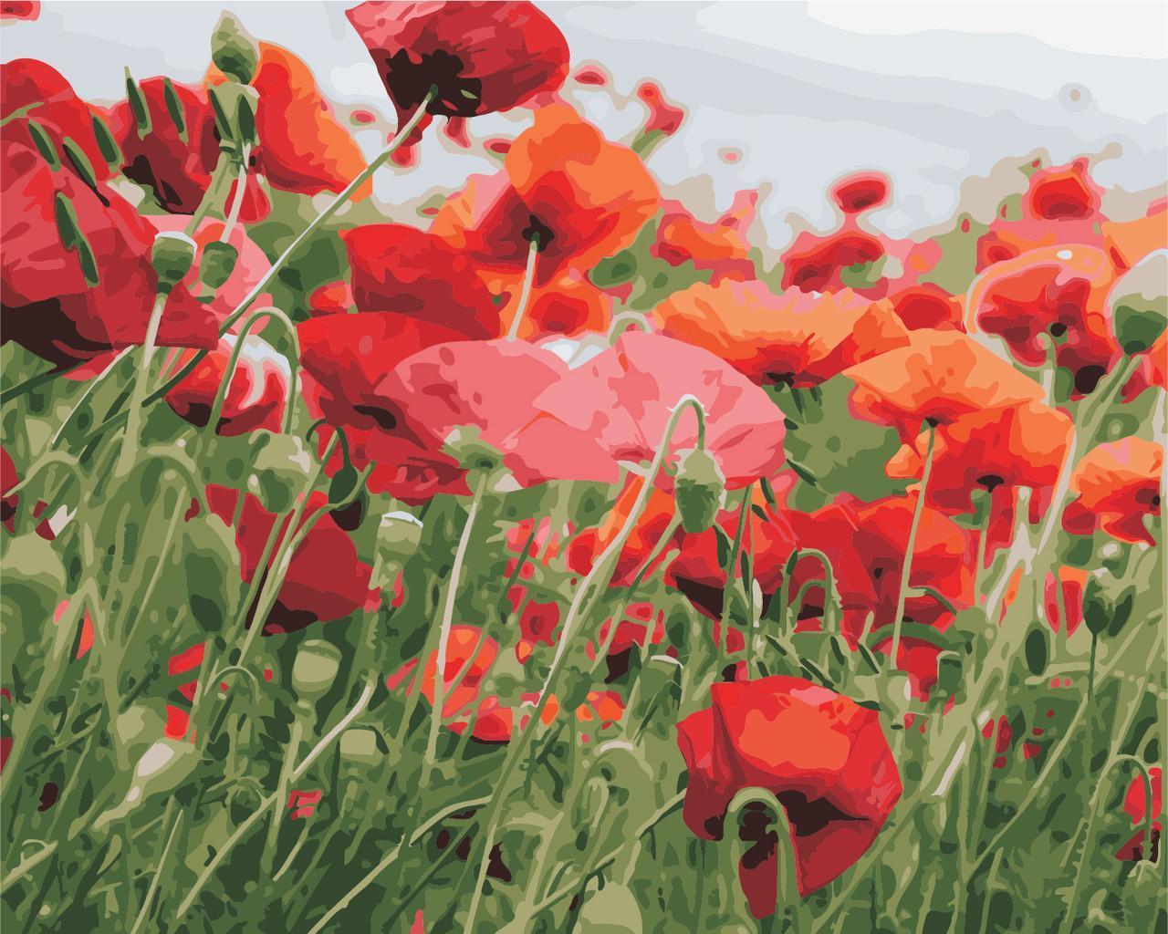 Картина рисование по номерам ArtStory Маків цвіт 40х50см AS0352 набор для росписи, краски, кисти, холст